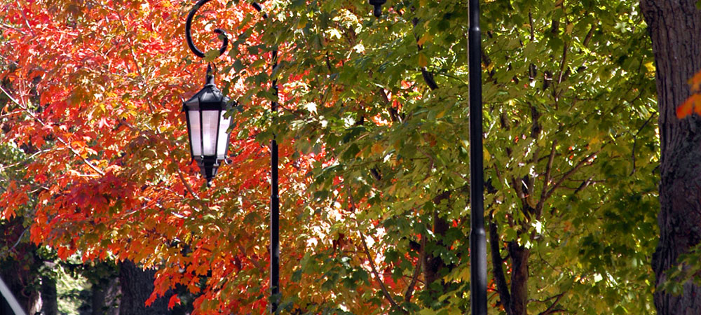 lamp against fall foliage